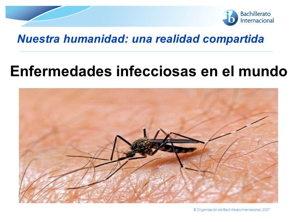 © Organización del Bachillerato Internacional, 2007 Nuestra humanidad: una realidad compartida La brecha digital y el acceso desigual a las tecnologías de la información y las comunicaciones