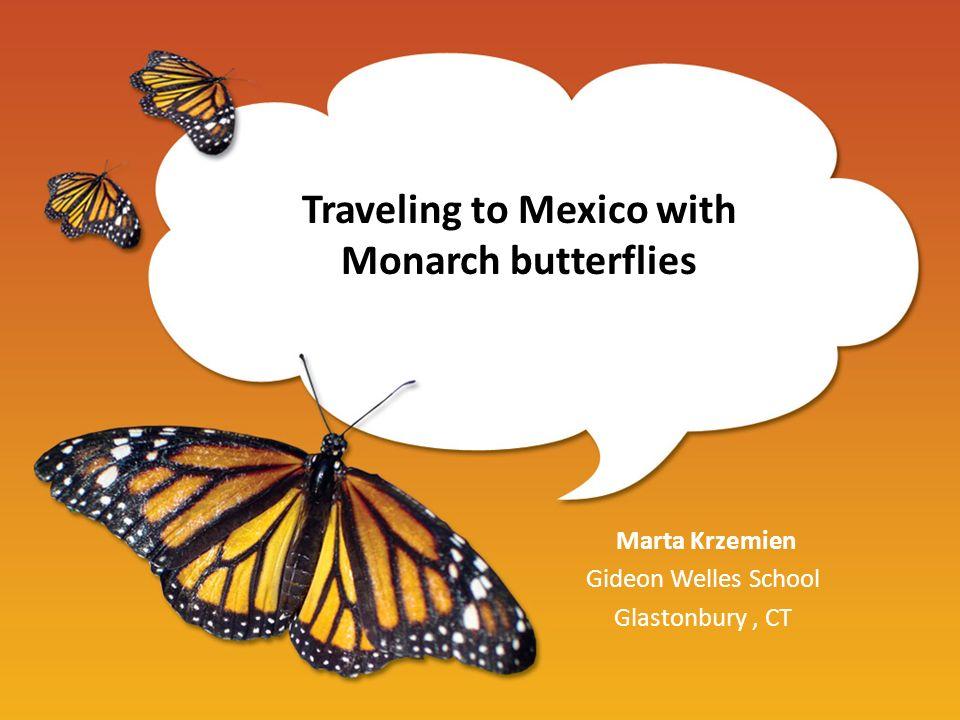 Traveling to Mexico with Monarch butterflies Marta Krzemien Gideon Welles School Glastonbury, CT