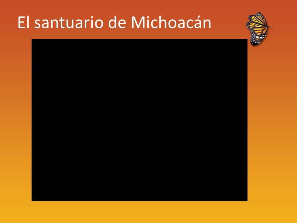 El santuario de Michoacán