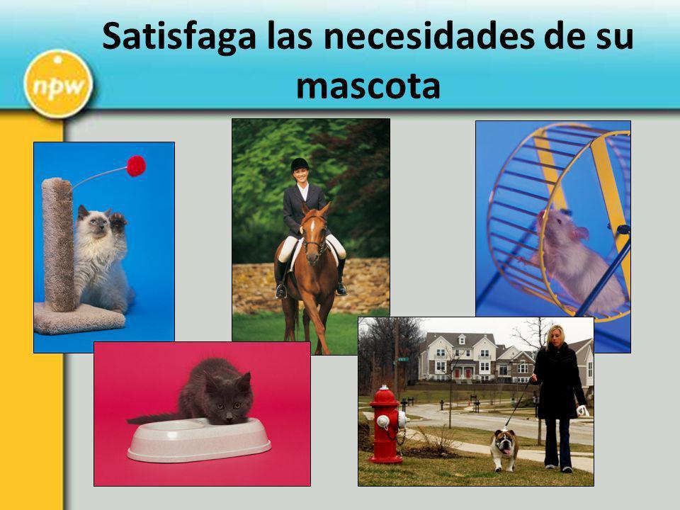 Satisfaga las necesidades de su mascota