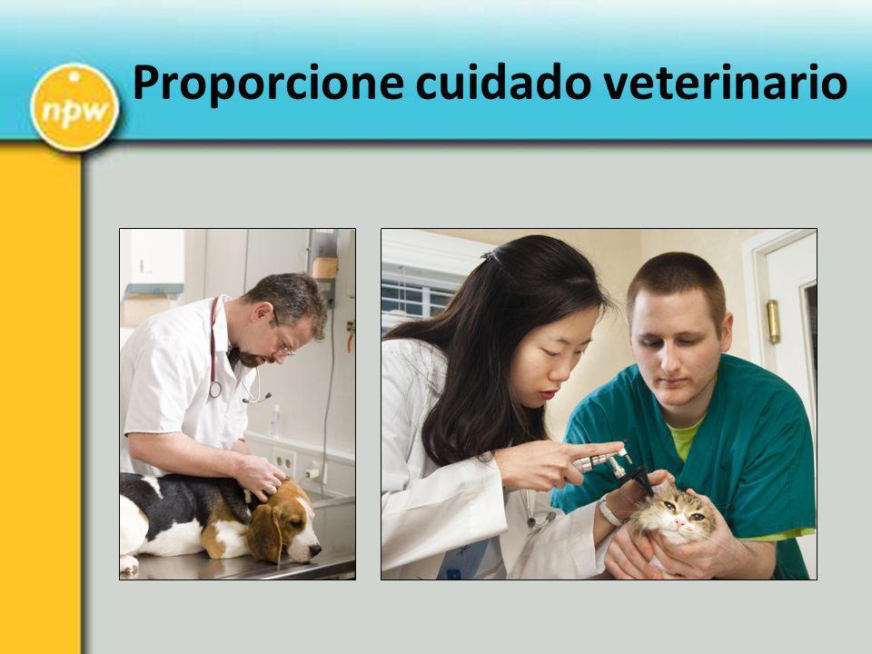 Proporcione cuidado veterinario