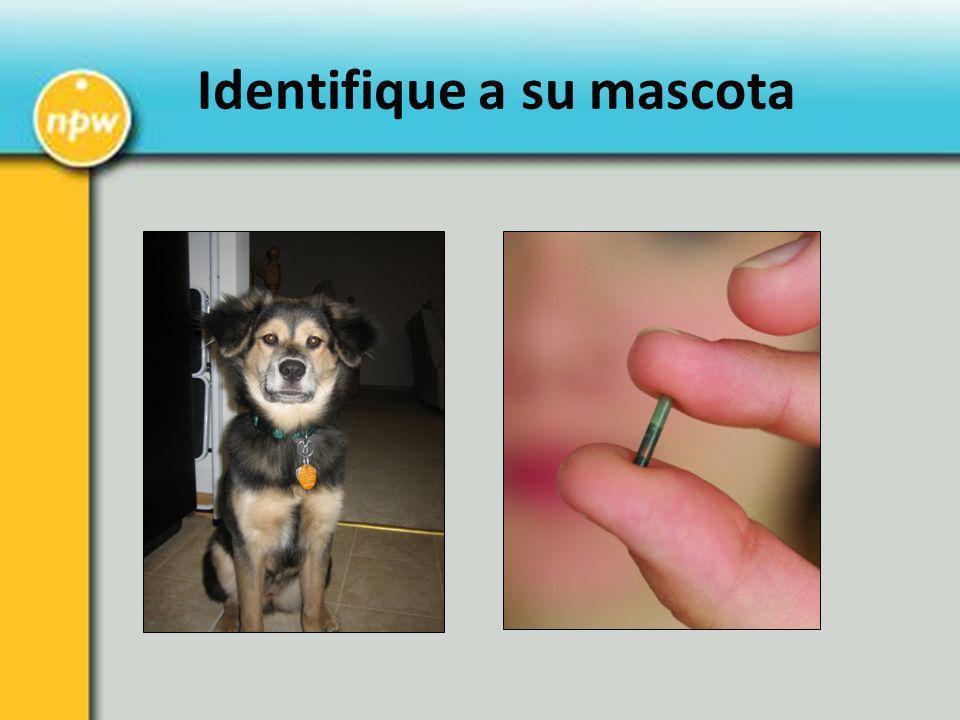 Identifique a su mascota