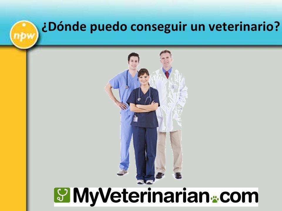 ¿Dónde puedo conseguir un veterinario?