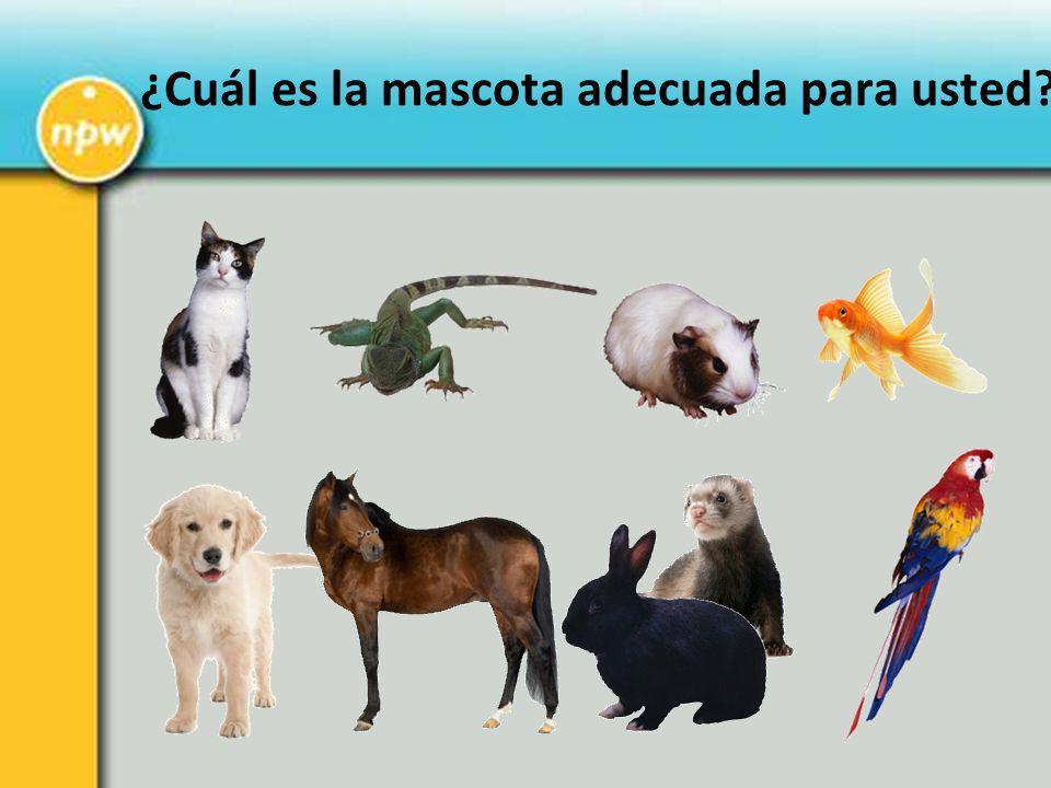 ¿Cuál es la mascota adecuada para usted?