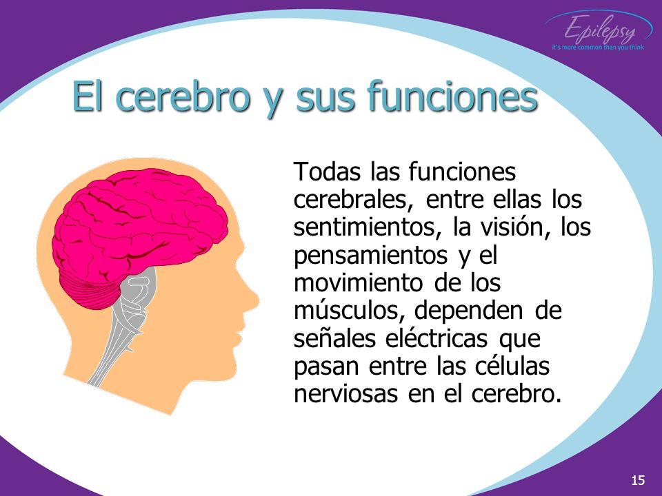 15 El cerebro y sus funciones Todas las funciones cerebrales, entre ellas los sentimientos, la visión, los pensamientos y el movimiento de los músculo