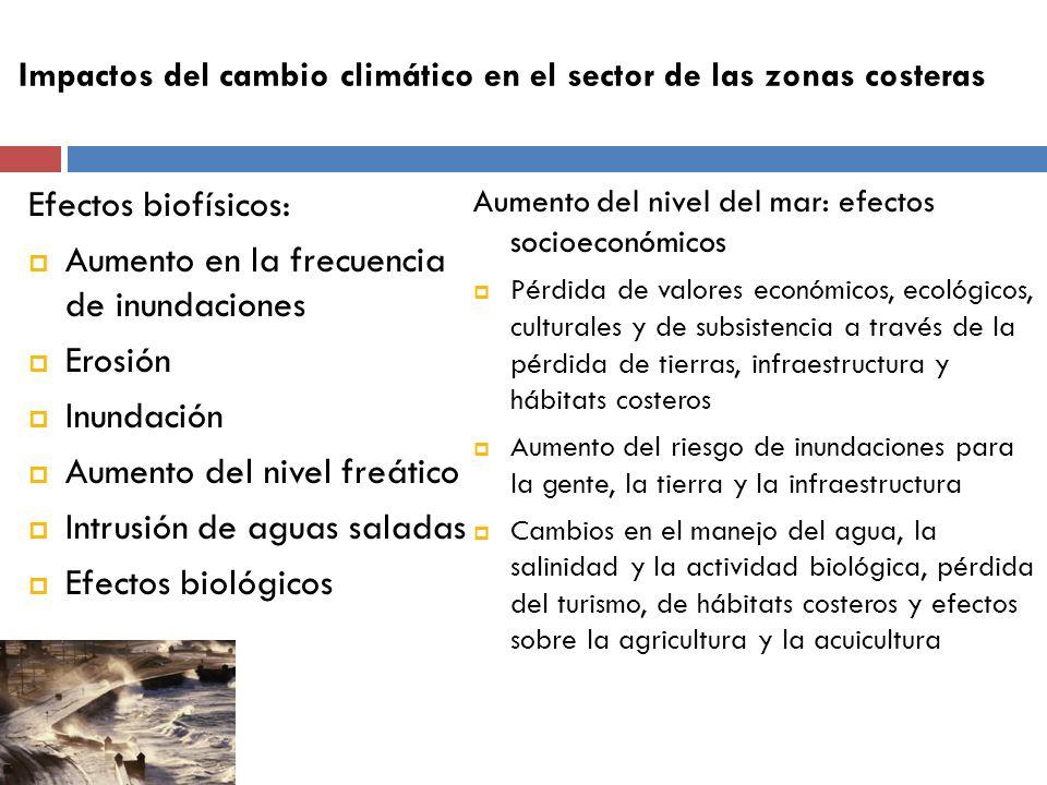 Efectos biofísicos: Aumento en la frecuencia de inundaciones Erosión Inundación Aumento del nivel freático Intrusión de aguas saladas Efectos biológic