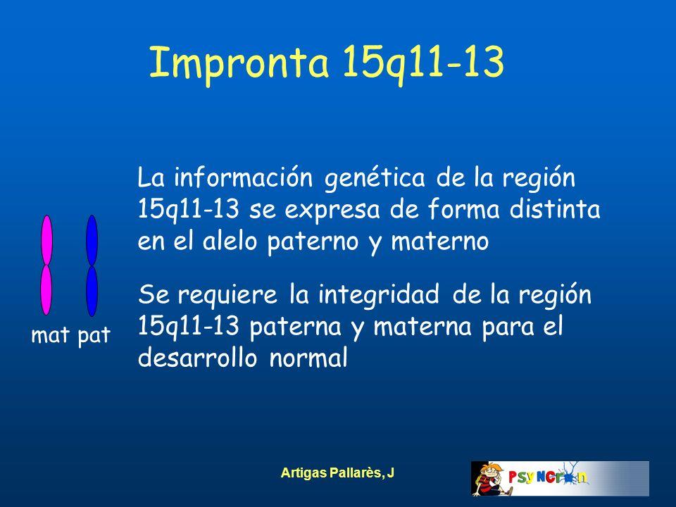 Artigas Pallarès, J Impronta 15q11-13 mat pat La información genética de la región 15q11-13 se expresa de forma distinta en el alelo paterno y materno