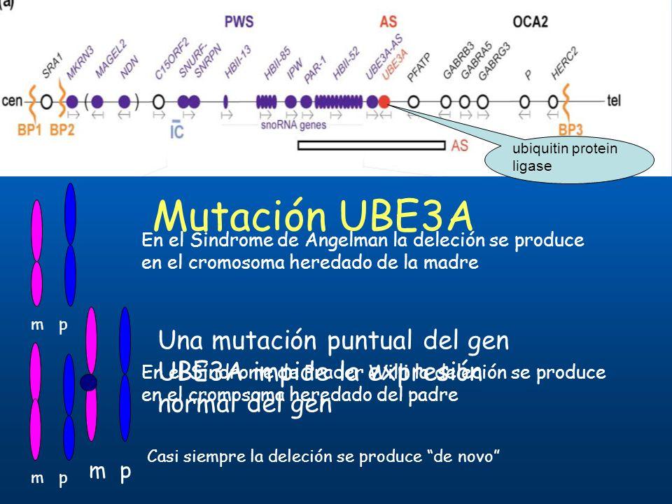 m p En el Sindrome de Angelman la deleción se produce en el cromosoma heredado de la madre m p En el Síndrome de Prader Willi la deleción se produce e