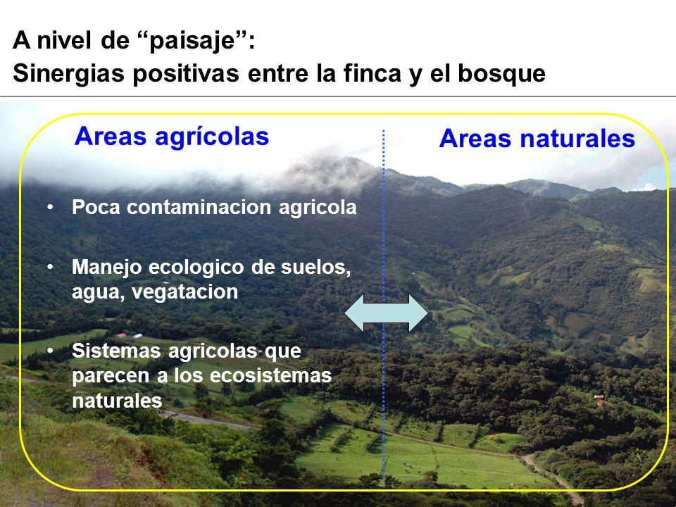 A nivel de paisaje: Sinergias positivas entre la finca y el bosque Areas naturales Areas agrícolas Poca contaminacion agricola Manejo ecologico de sue