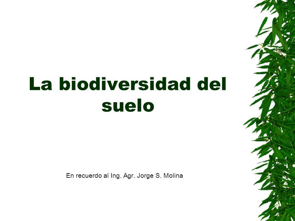 La biodiversidad del suelo En recuerdo al Ing. Agr. Jorge S. Molina