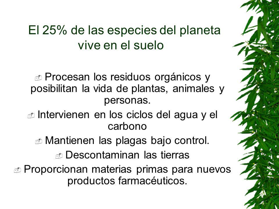 El 25% de las especies del planeta vive en el suelo Procesan los residuos orgánicos y posibilitan la vida de plantas, animales y personas. Intervienen