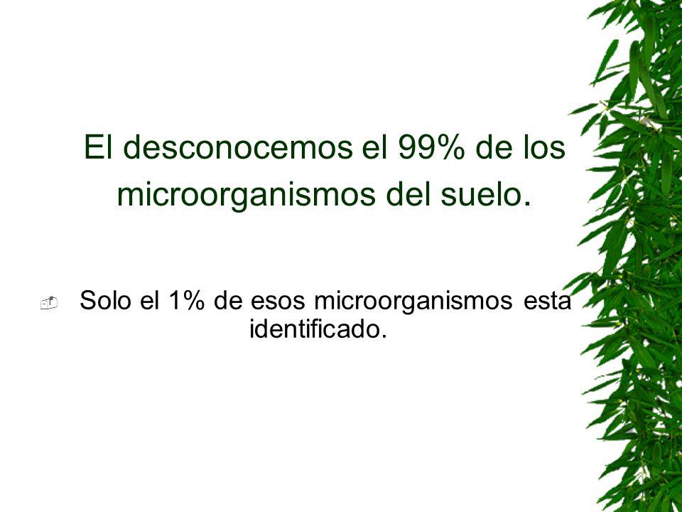 El desconocemos el 99% de los microorganismos del suelo. Solo el 1% de esos microorganismos esta identificado.