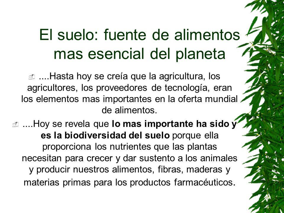 El suelo: fuente de alimentos mas esencial del planeta....Hasta hoy se creía que la agricultura, los agricultores, los proveedores de tecnología, eran