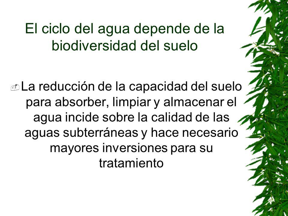 El ciclo del agua depende de la biodiversidad del suelo La reducción de la capacidad del suelo para absorber, limpiar y almacenar el agua incide sobre