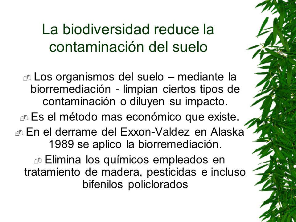 La biodiversidad reduce la contaminación del suelo Los organismos del suelo – mediante la biorremediación - limpian ciertos tipos de contaminación o d