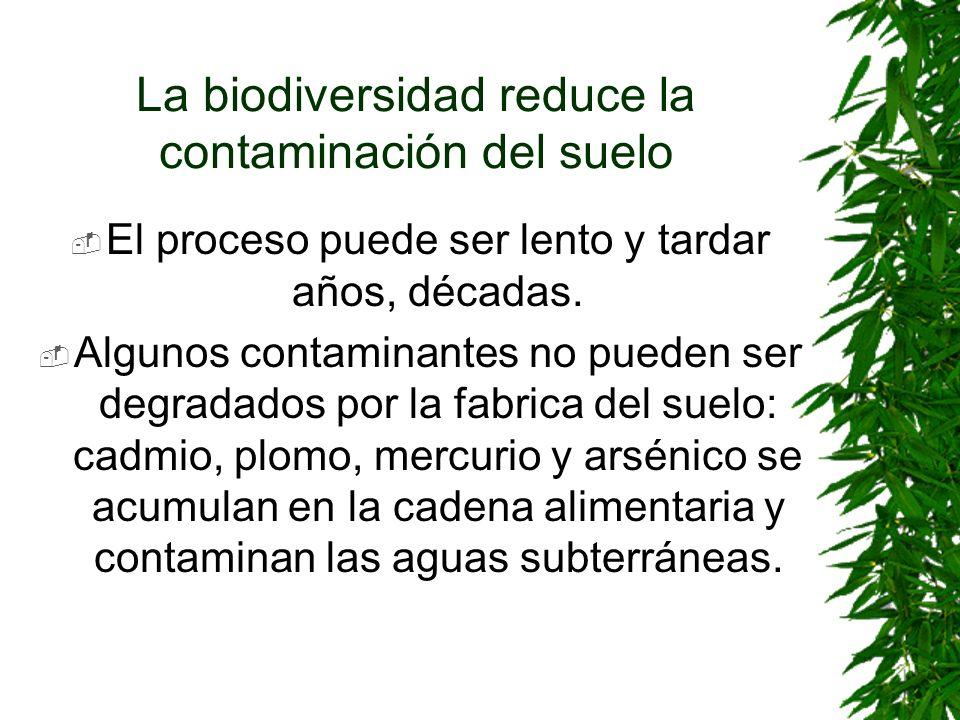 La biodiversidad reduce la contaminación del suelo El proceso puede ser lento y tardar años, décadas. Algunos contaminantes no pueden ser degradados p