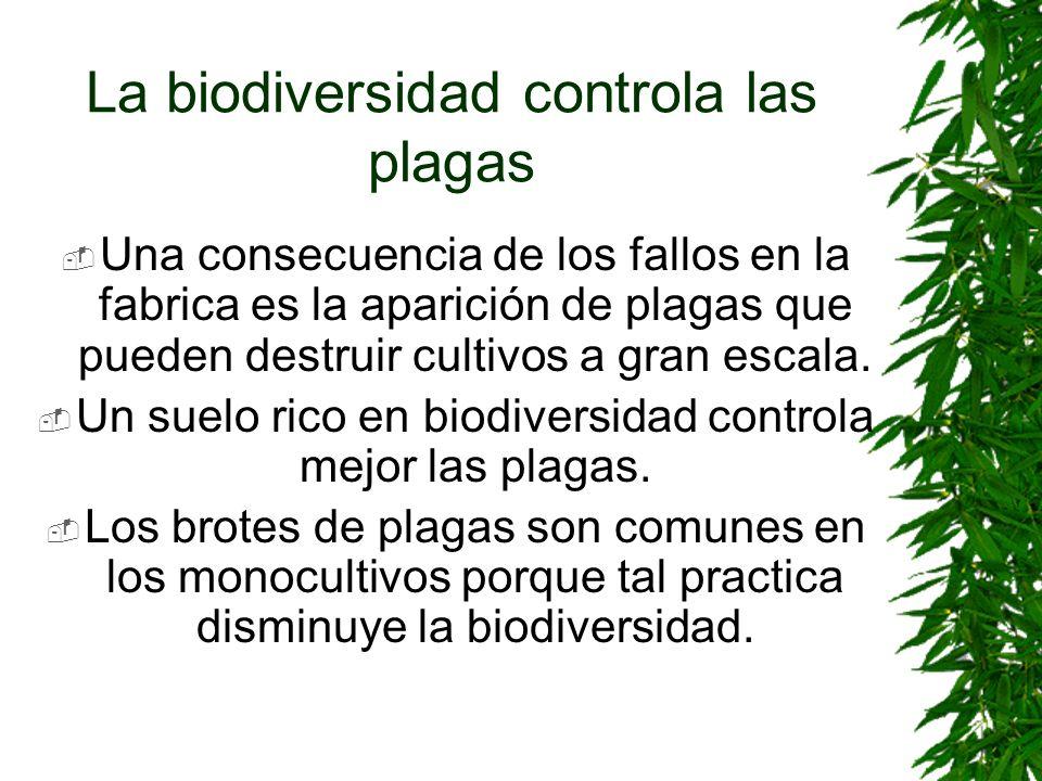 La biodiversidad controla las plagas Una consecuencia de los fallos en la fabrica es la aparición de plagas que pueden destruir cultivos a gran escala
