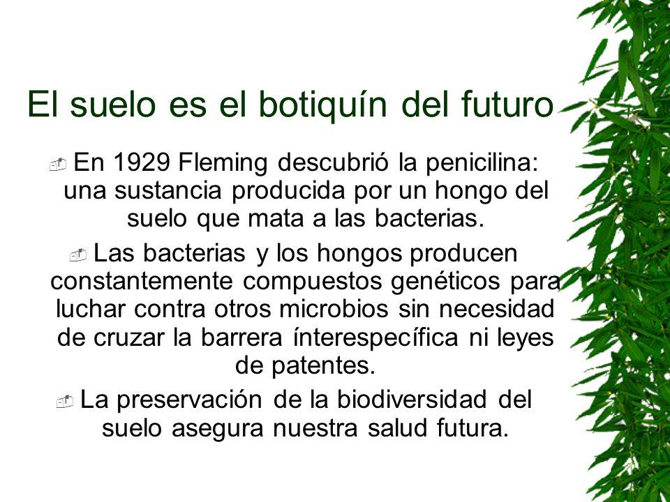 El suelo es el botiquín del futuro En 1929 Fleming descubrió la penicilina: una sustancia producida por un hongo del suelo que mata a las bacterias. L