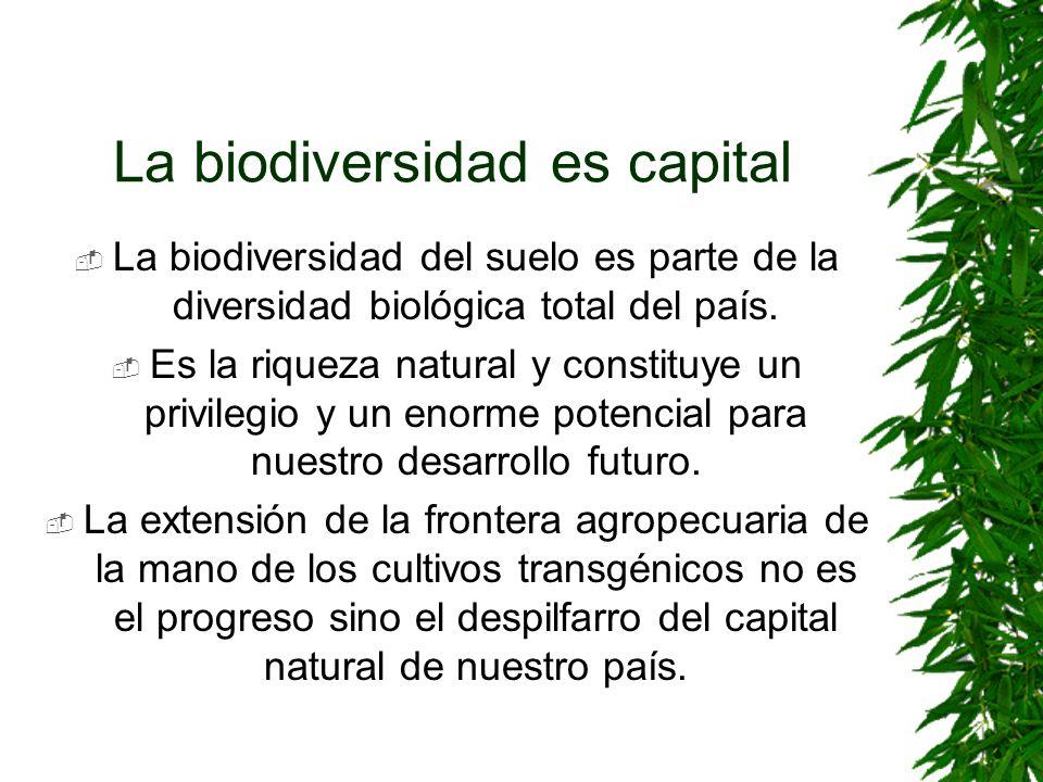 La biodiversidad es capital La biodiversidad del suelo es parte de la diversidad biológica total del país. Es la riqueza natural y constituye un privi