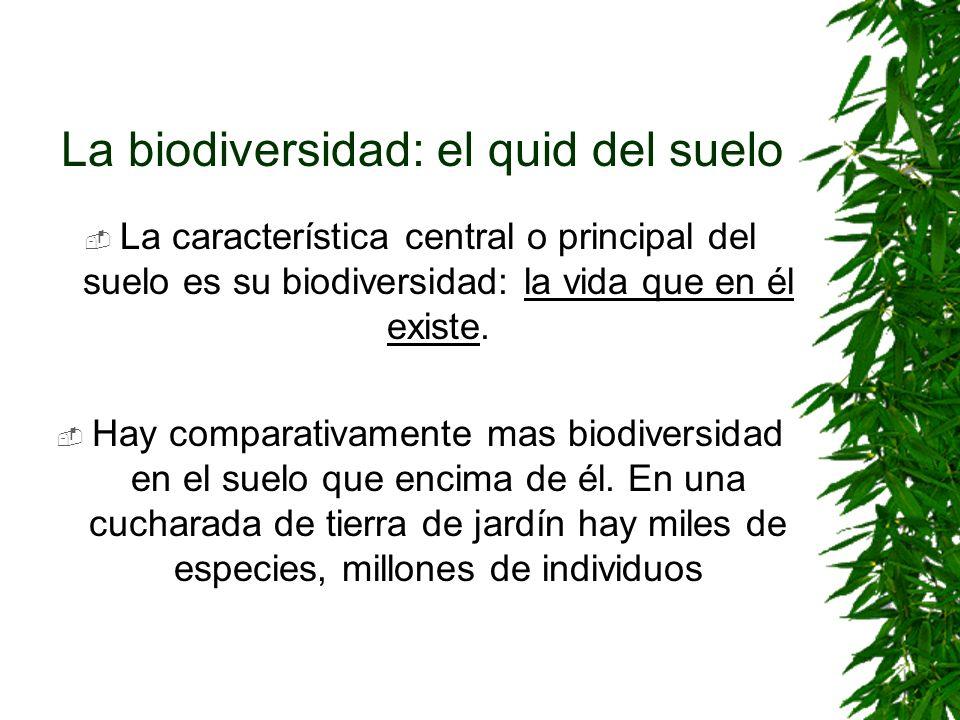 La biodiversidad: el quid del suelo La característica central o principal del suelo es su biodiversidad: la vida que en él existe. Hay comparativament