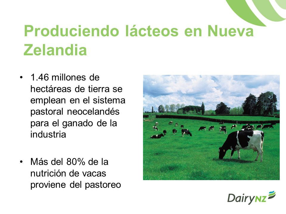 Dairying Statistics Rebaños lecheros11,600 Número de vacas ordeñadas4.3m Volumen de leche producida15 mil millones de litros Promedio de cabezas por rebaño366 Densidad promedio (vacas/ha)2.8 Promedio de sólidos lácteos por vaca (kg)330 Sólidos lácteos por rebaño (kg)120,000 $ Kg de sólidos lácteos (pago)NZ$6.30-$6.40 (pronóstico para 2009/10)