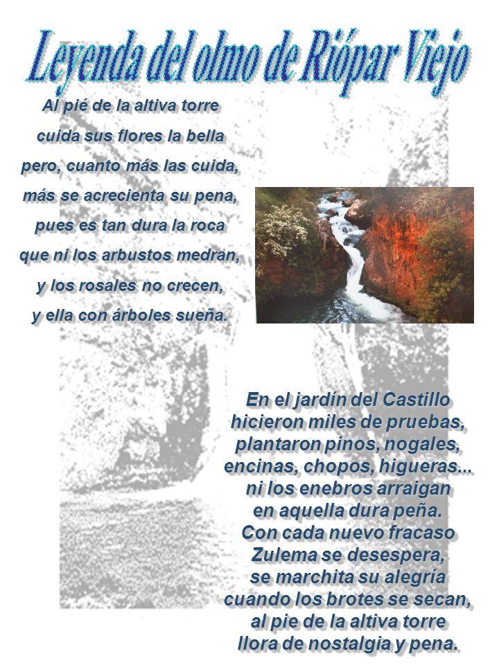 En el jardín del Castillo hicieron miles de pruebas, plantaron pinos, nogales, encinas, chopos, higueras...