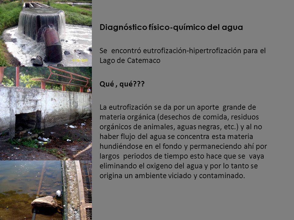 Diagnóstico físico-químico del agua Se encontró eutrofización-hipertrofización para el Lago de Catemaco Qué, qué??? La eutrofización se da por un apor