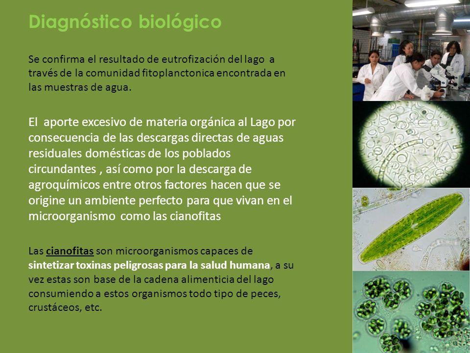 Diagnóstico microbiológico En cuanto al análisis microbiológico realizado en Tegogolos, agua y sedimento, se encontró la presencia de bacterias coliformes totales y fecales en las dos temporadas.
