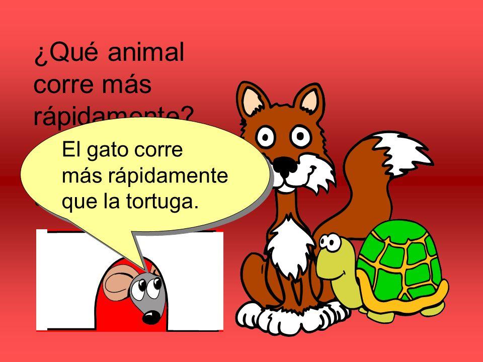 ¿Qué animal corre más rápidamente? ¿El gato o la tortuga? El gato corre más rápidamente que la tortuga.