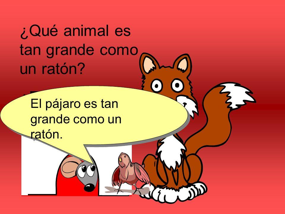 ¿Qué animal es tan grande como un ratón? ¿El gato o el pájaro? El pájaro es tan grande como un ratón.