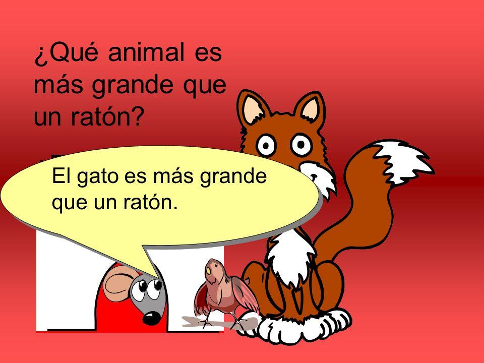 ¿Qué animal es más grande que un ratón? ¿El gato o el pájaro? El gato es más grande que un ratón.