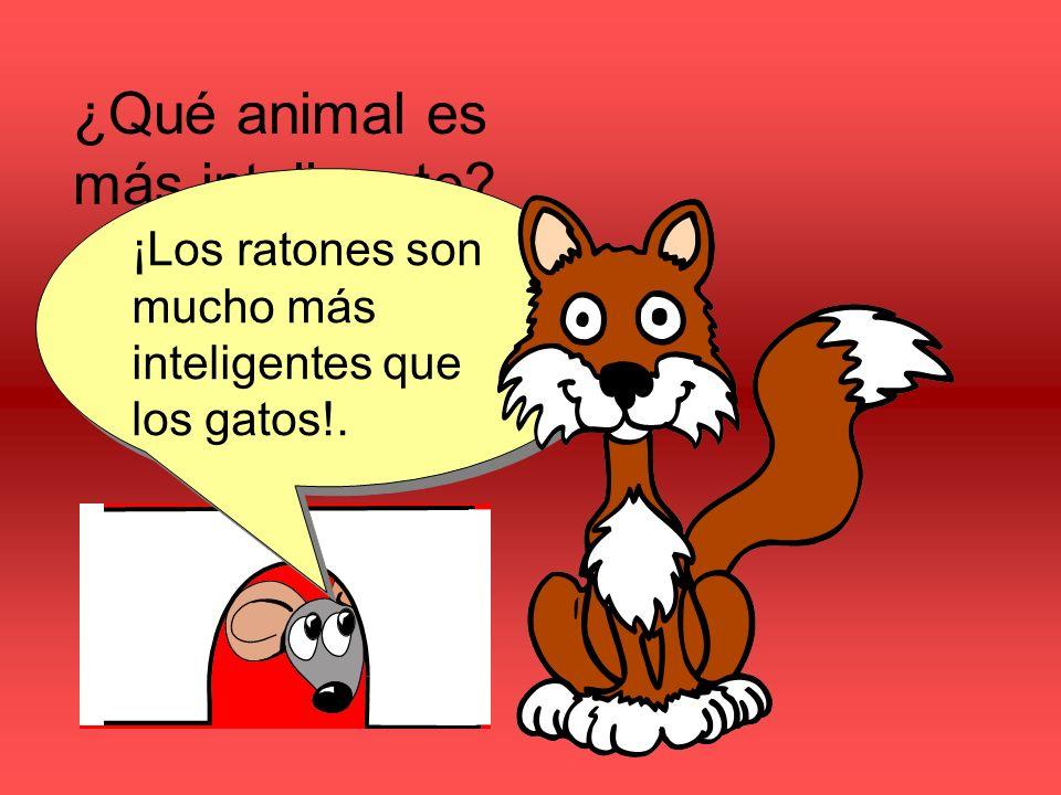 ¿Qué animal es más inteligente? ¿Los gatos o los ratónes? ¡Los ratones son mucho más inteligentes que los gatos!.