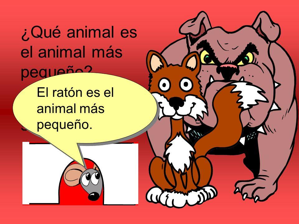 ¿Qué animal es el animal más pequeño? ¿El perro, el gato o el ratón? El ratón es el animal más pequeño.