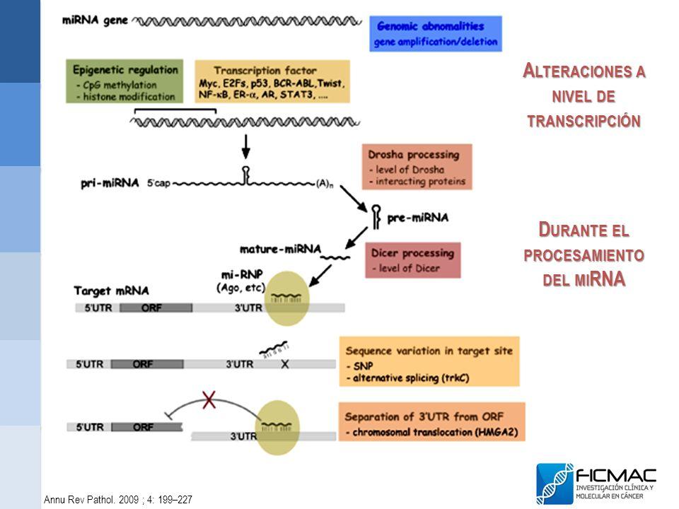 Annu Rev Pathol. 2009 ; 4: 199–227 D URANTE EL PROCESAMIENTO DEL MI RNA A LTERACIONES A NIVEL DE TRANSCRIPCIÓN