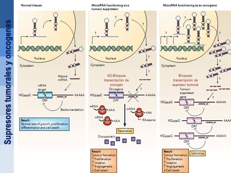 Supresores tumorales y oncogenes Bloquear transcripción de supresor tumoral NO-Bloquea transcripción de oncogén