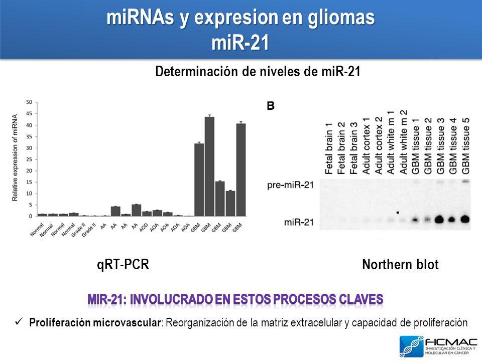 miRNAs y expresion en gliomas miR-21 Determinación de niveles de miR-21 Proliferación microvascular : Reorganización de la matriz extracelular y capac