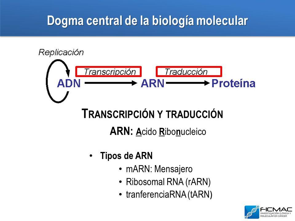 Dogma central de la biología molecular T RANSCRIPCIÓN Y TRADUCCIÓN ARN: A cido R ibo n ucleico Tipos de ARN mARN: Mensajero Ribosomal RNA (rARN) tranf