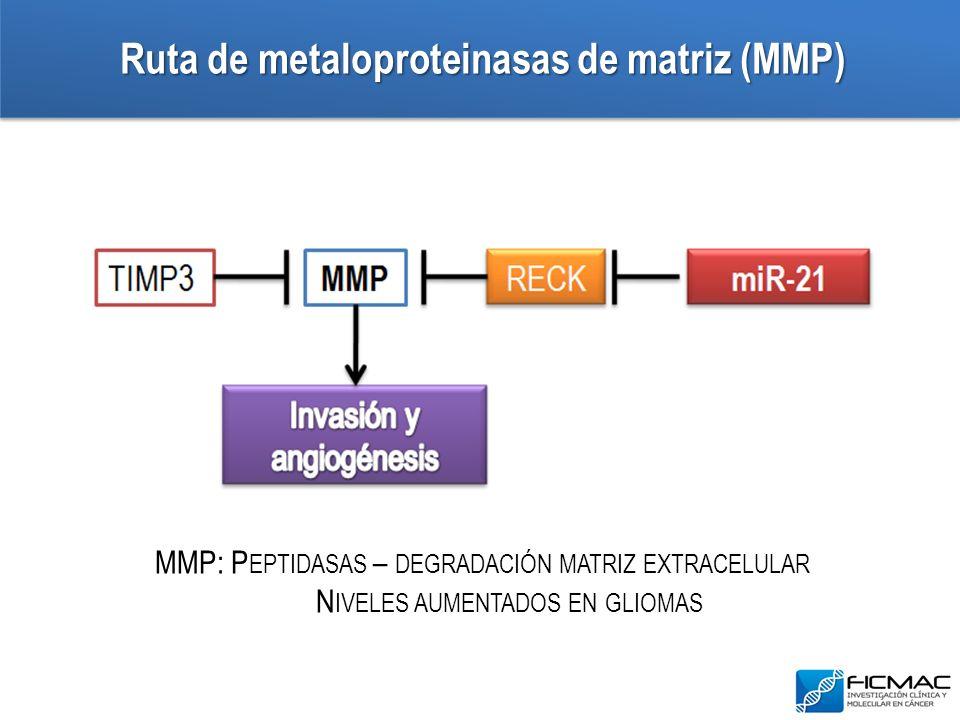 Ruta de metaloproteinasas de matriz (MMP) MMP: P EPTIDASAS – DEGRADACIÓN MATRIZ EXTRACELULAR N IVELES AUMENTADOS EN GLIOMAS