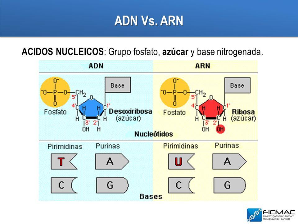 ADN Vs. ARN ACIDOS NUCLEICOS : Grupo fosfato, azúcar y base nitrogenada.