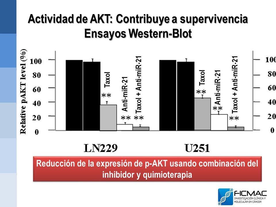 Actividad de AKT: Contribuye a supervivencia Ensayos Western-Blot Reducción de la expresión de p-AKT usando combinación del inhibidor y quimioterapia