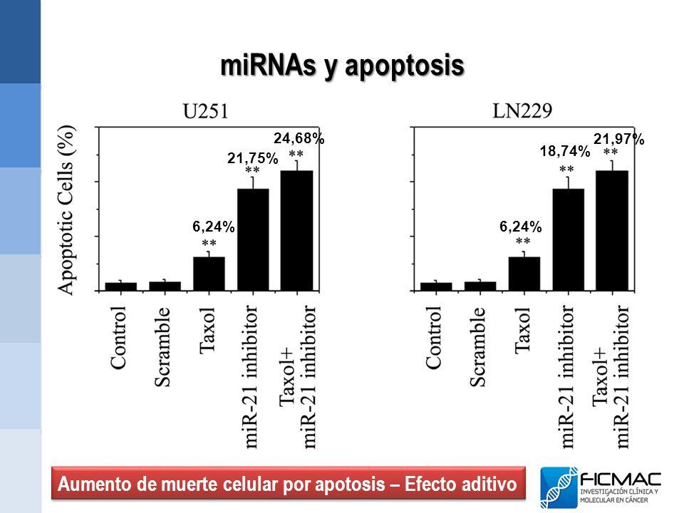 miRNAs y apoptosis 6,24% 21,75% 18,74% 24,68% 21,97% Aumento de muerte celular por apotosis – Efecto aditivo