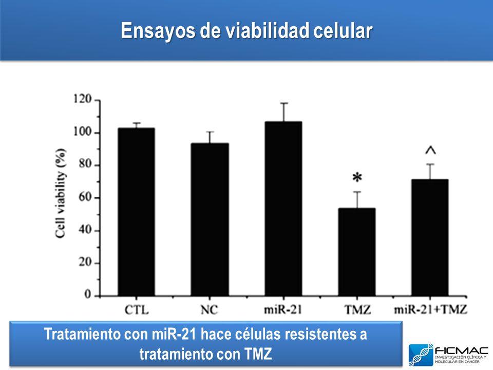 Ensayos de viabilidad celular Tratamiento con miR-21 hace células resistentes a tratamiento con TMZ