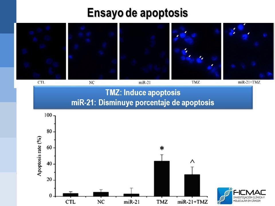 Ensayo de apoptosis TMZ: Induce apoptosis miR-21: Disminuye porcentaje de apoptosis TMZ: Induce apoptosis miR-21: Disminuye porcentaje de apoptosis