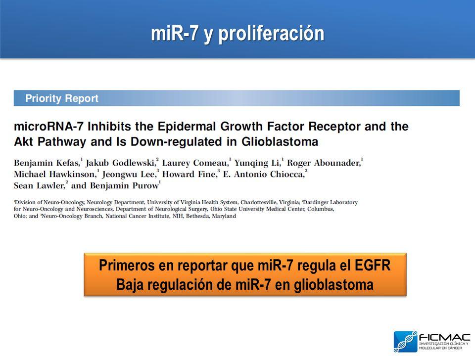 miR-7 y proliferación Primeros en reportar que miR-7 regula el EGFR Baja regulación de miR-7 en glioblastoma Primeros en reportar que miR-7 regula el