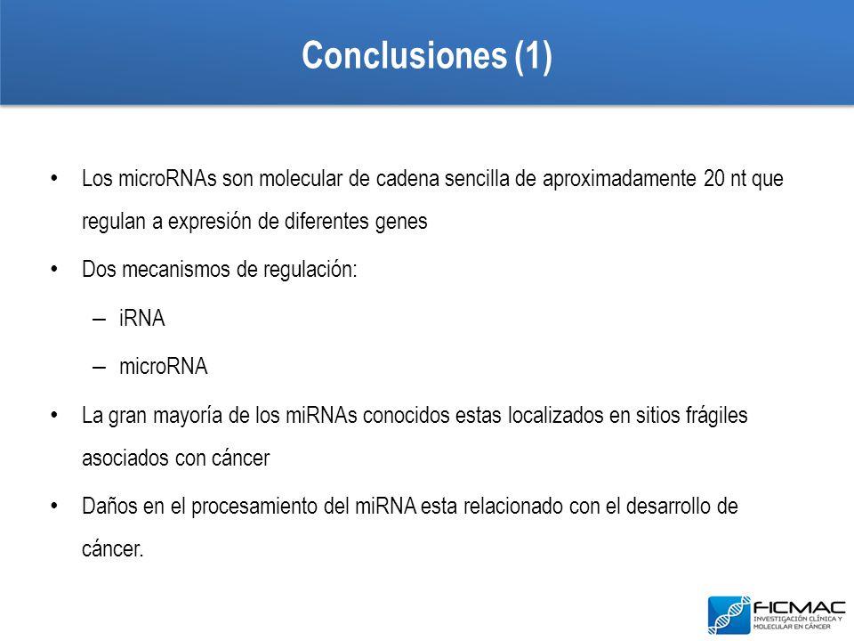 Conclusiones (1) Los microRNAs son molecular de cadena sencilla de aproximadamente 20 nt que regulan a expresión de diferentes genes Dos mecanismos de