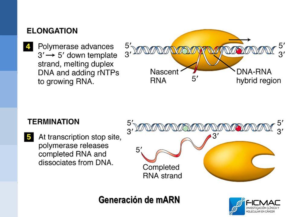 Generación de mARN