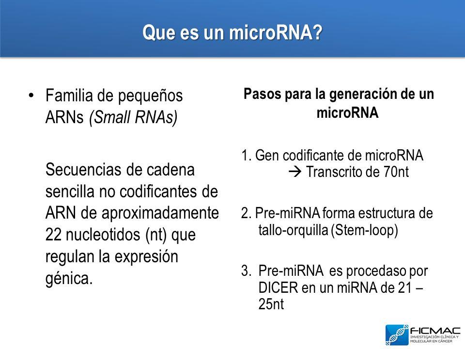 Que es un microRNA? Familia de pequeños ARNs (Small RNAs) Secuencias de cadena sencilla no codificantes de ARN de aproximadamente 22 nucleotidos (nt)