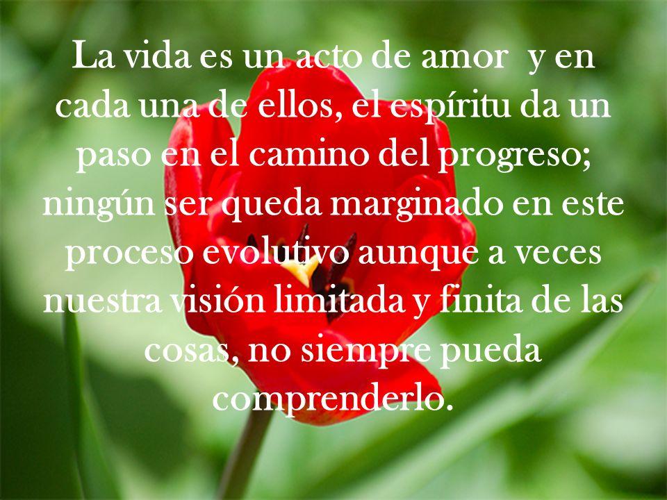 La vida es un acto de amor y en cada una de ellos, el espíritu da un paso en el camino del progreso; ningún ser queda marginado en este proceso evolut