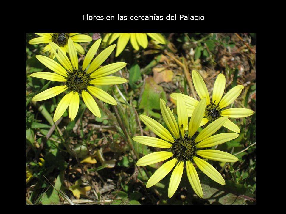 Flores en las cercanías del Palacio