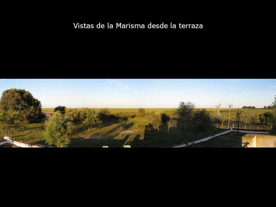Vistas de la Marisma desde la terraza